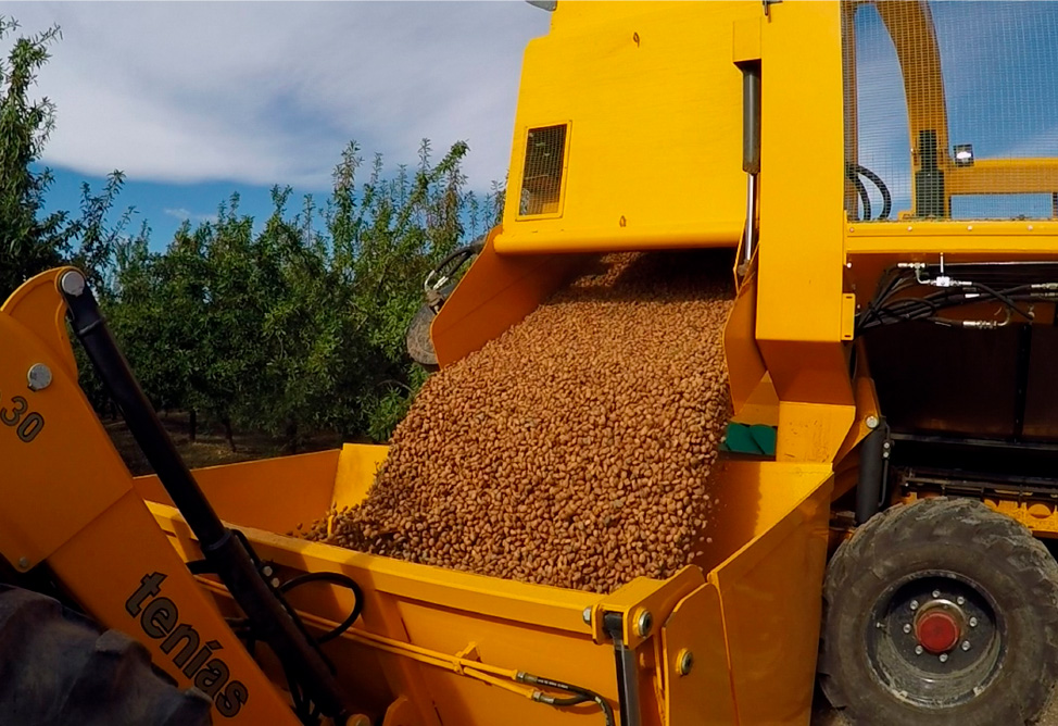 Tenías almond harvester depositing its harvested almonds in the container