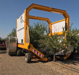 Photo of a few almond harvesters working